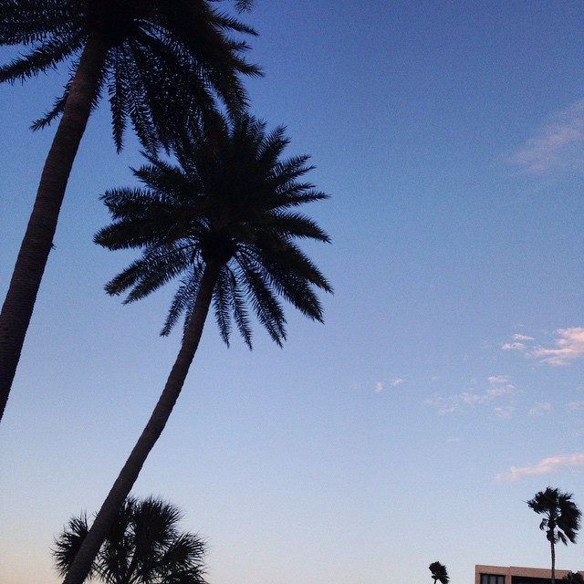 Don't let Monday get you down. #mondayblues #blueskies #mondaymotivation #inspired #backdrop #palmtrees #palms