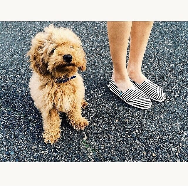 #Paezsurfy and dog with a great hair day live from Brasil! #Paezshoes #Wetrip #picoftheday