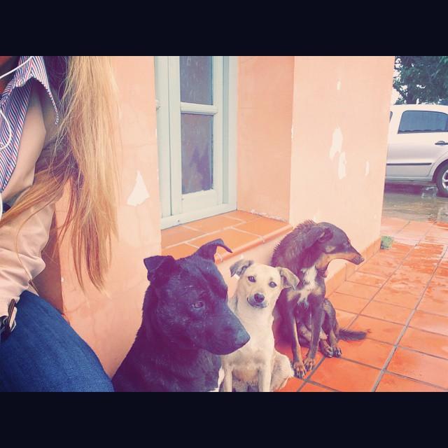 Les presento a mis adoptivos de la fábrica. Así estamos...bajo la lluvia #Incondicionales