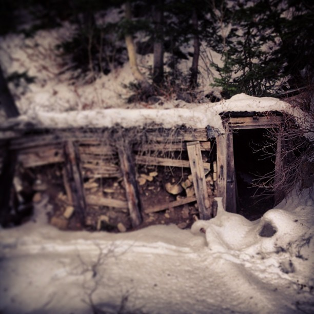 #kittenfactory thinks abandoned mines are scary #utahgold