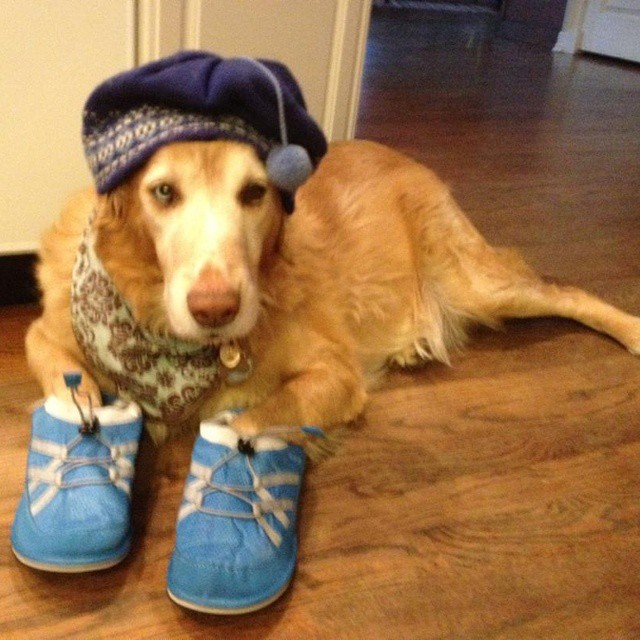 Chillin in my #pakems #instacool #picoftheday #dog #pets #petsagram