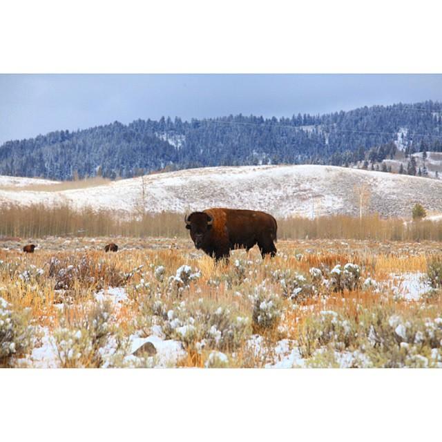 Night y'all! #claytonhumphriesphotography #wyoming #buffalo