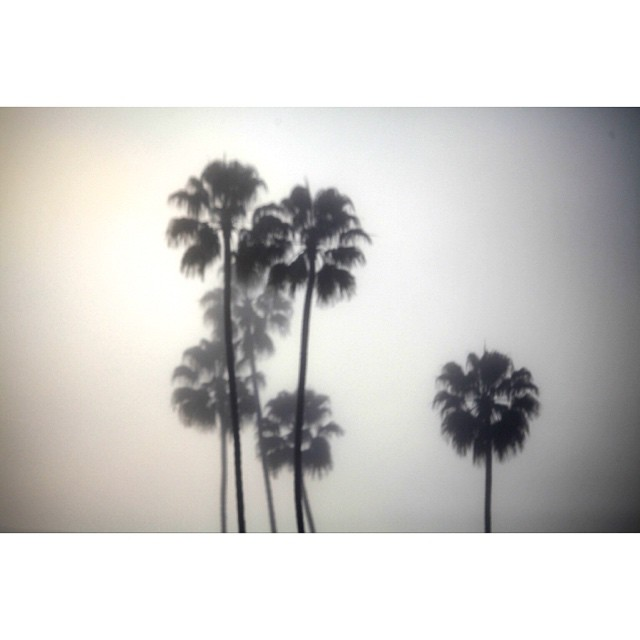 When the fog rolls in. #california #claytonhumphriesphotography #canon #palmtrees #aloha #fog