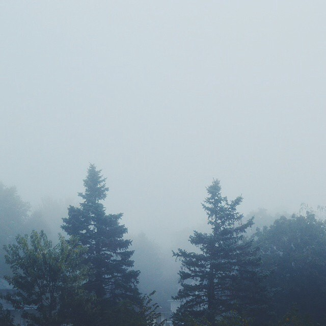 The fog life is the best life // #NatureOfProof captured by @lifeasahappycupcake