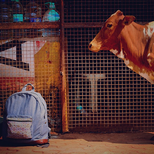 A gas station cow watching over a  Good-Daypack. #india #veganleather #vegan #connectglobally #estwst