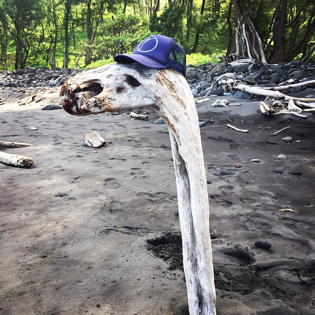 #driftwood giraffe spotted wearing #Organik trucker on #bigisland #Hawaii