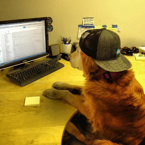 We are so busy building skis  this time of year we had to hire a receptionist. #bestdogever is still learning the ropes so please be patient with all calls and inquires.
