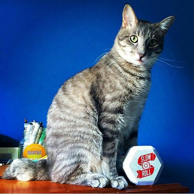 Do you #slowroll or nah? #catsbelike