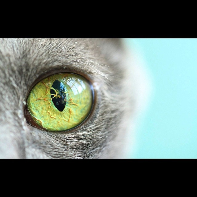 This is Taj. #amazing #cateye