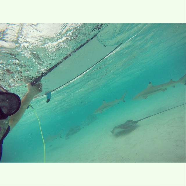 sharks & rays #awesome #awesomesurfboards #tahiti #wannastayhere