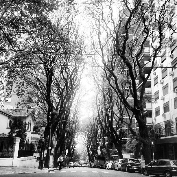 Pulmóncito de #bsas city  Belgrano #argentina