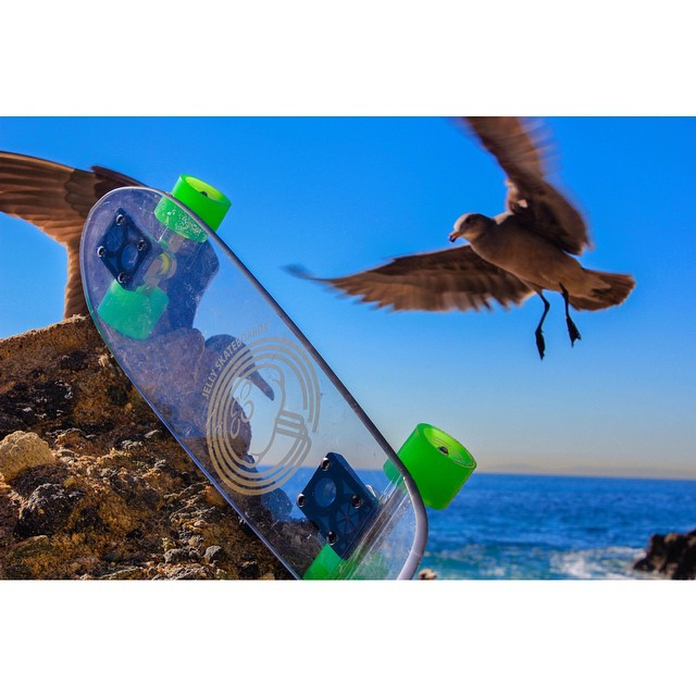 """""""Mine! Mine! Mine! Mine!"""" #jellyskateboards #jellylife #findingnemo #seagulls"""