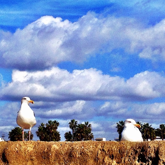 Seagulls crack me up! Love birds? Or is the on on the left checking on the one on the right's booty and she ain't having it? #calmafterstorm