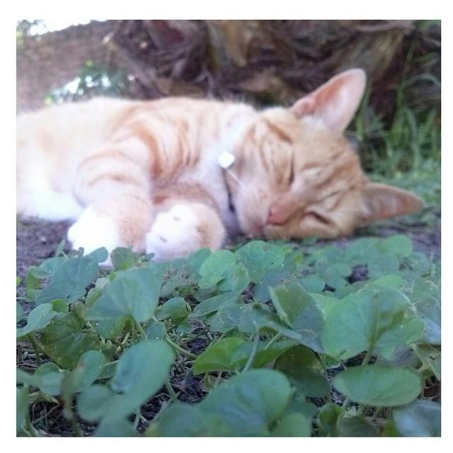 La fiaca en gatuna #rest #nice #cat #love #instamoment #instacat #beauty