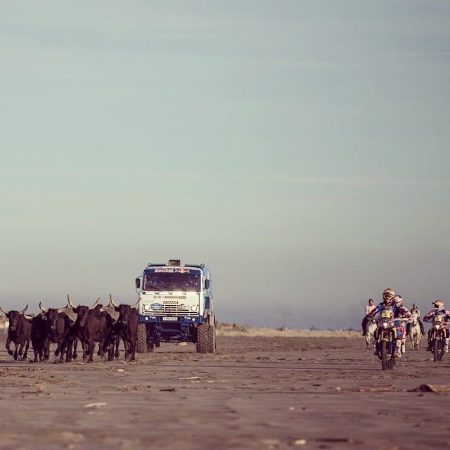 The bulls are ready to run. The epic Dakar adventure is set to begin. #dakar #gardiansofdakar.