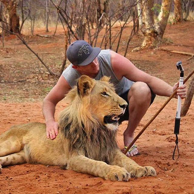 What's the coolest selfie you've taken? @j_o_n_o_p sets up for a lion selfie in Africa. GoPro HERO4 | GoPole Reach #gopro #gopole #gopolereach #lion #lionselfie