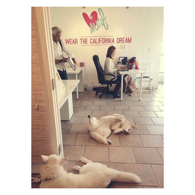 Ruff day in the office for these pups #luvpups #luvsurf #huskies