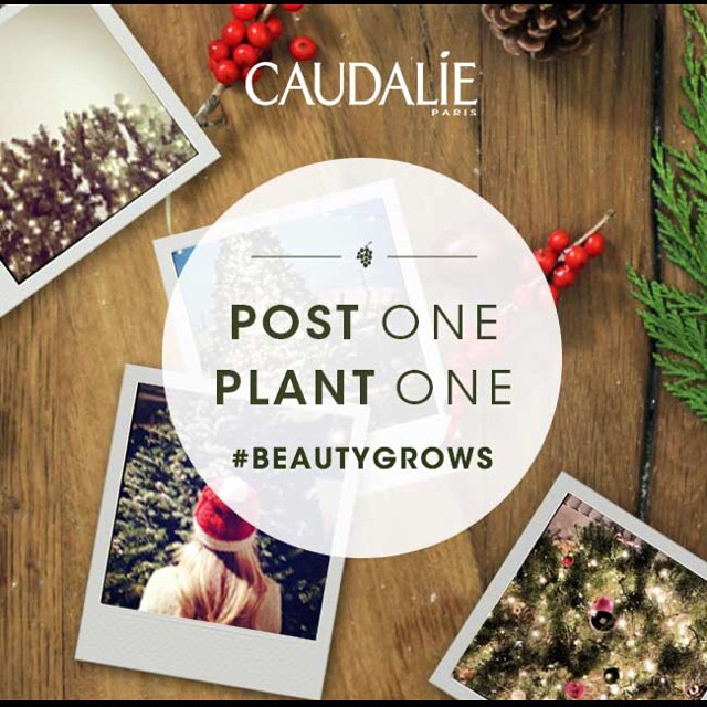 Do you have a favorite holiday tree? Join member @caudalie and @nationalforests in their Post One, Plant One campaign! For every holiday tree you share from now until January 15th, @caudalie will plant one in your honor! #BeautyGrows