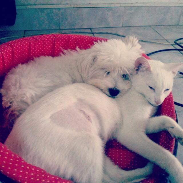 Lo que es tener a las mejores mascotas del mundo! Tia de estas dos hermosas criatyras ❤