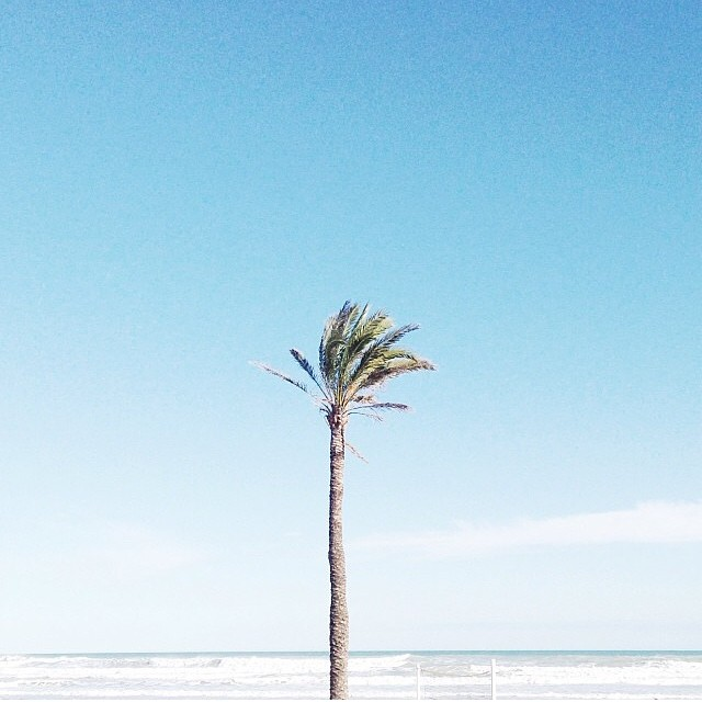 Sunday: Keep palm. #regram @anniset #toloveandfollow #picoftheday