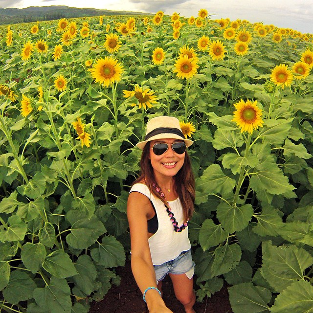 Sunflower fields. Photo: @janemoon #gopro #gopole #gopoleevo #sunflower #hawaii