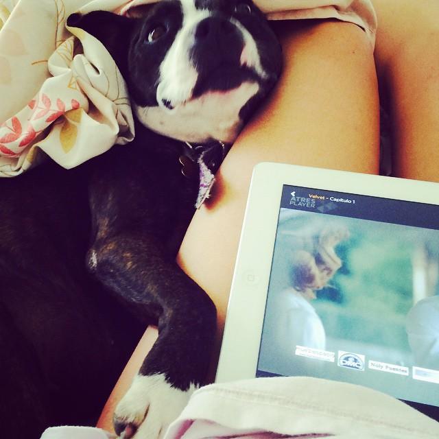Alguien quiere mi atención... #suyay #cama #MaratónDeSeries #velvet