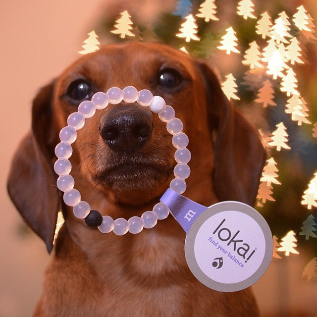 It's a tail wagging day! #livelokai Thanks @thedogsaga