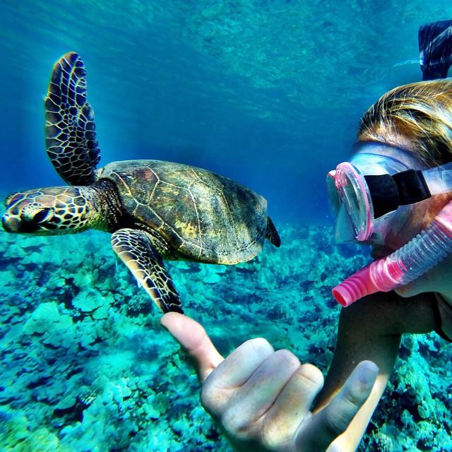 It's aloha Friday! Shaka brah! Turtle selfie shot on @gopro #gopro