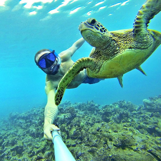 @ducpower89 turtle selfie in Hawaii. #gopro #gopole #gopolereach #turtleselfie #hawaii