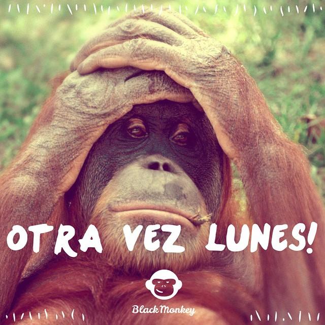 Otra vez Lunes! No importa, ya se vienen las fiestas!!! #blackmonkey #alpargatas #calzadocononda #blackmonkeystore #summer #playa #instaphoto #picoftheday #quito #cdelu #argentina #lunes