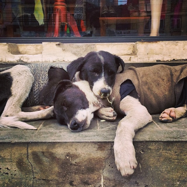 There are a lot of street dogs in Kathmandu and probably many who are really cold this winter, so it's pretty great to stumble upon some puppies cuddling with their wool sweaters on. #staycozy #give #winter #connectglobally #nepal #estwst