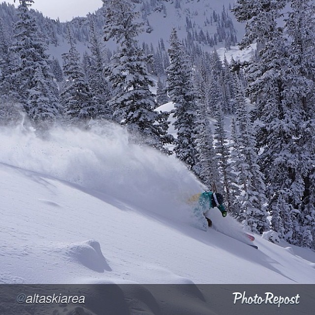 #Regram from @altaskiarea... DPS' @ermepowskier pillaging #powder off the freshly opened #Supreme chair. Photo: @johnsonjoe. #dpsskis