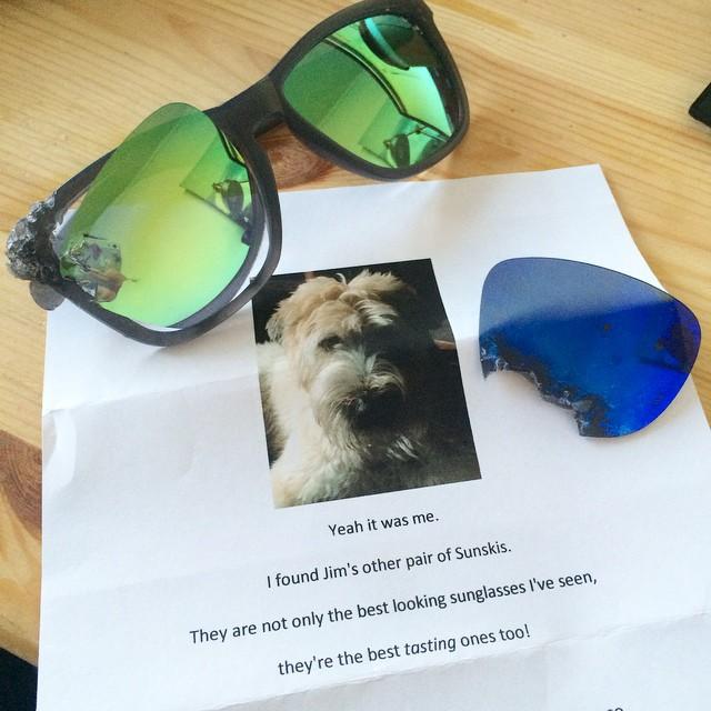 Sunski HQ loves a good #dogshaming. We forgive you, Fergus