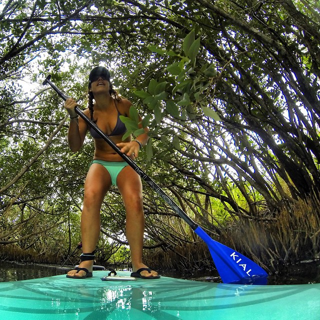Getting lost in the mangroves