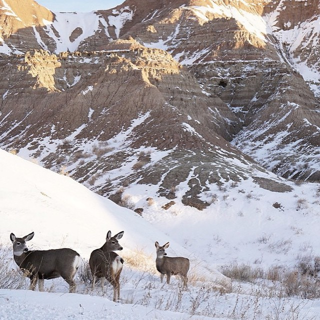 @i_am_chris_new has been sharing some incredible wildlife photos from his adventures, like this one in Buffalo Gap National Grassland! #radparks #parksproject