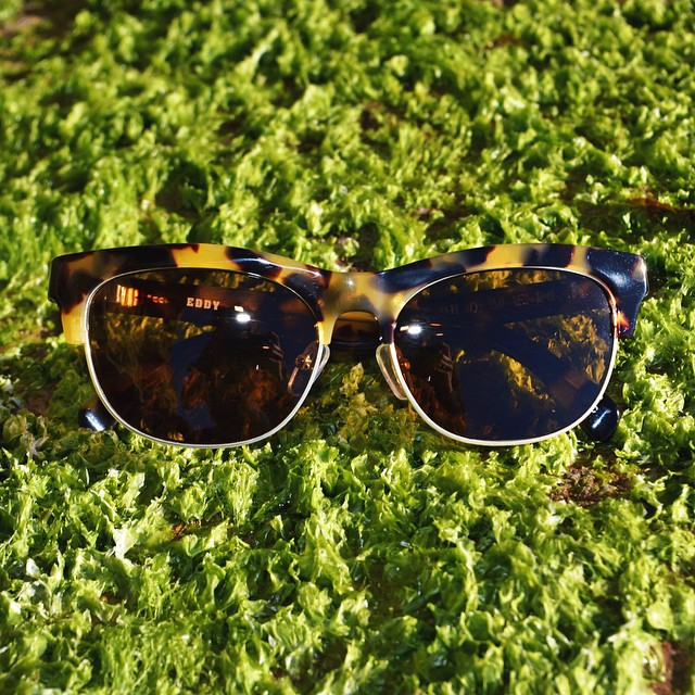 | The grass isn't always greener on the other side | #hovenvision #Eddy #polarized #beach #wayfarer #instagood #tgif #workhardplayhard #fresh