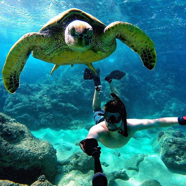 Hanging out with this little guy today • Kameleonz.com • #goprooftheday #goprouniverse #goproselfie #goscope #gopole #surf #gopro_alive #surfing #basicallysponsored #surfer #hero #hero4 #gopro #scubadiving #scuba #caribbean #goprounited...