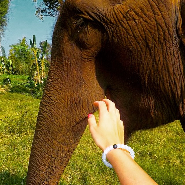 New friends #Thailand #lokaiworld #livelokai  Thanks @alexafiset
