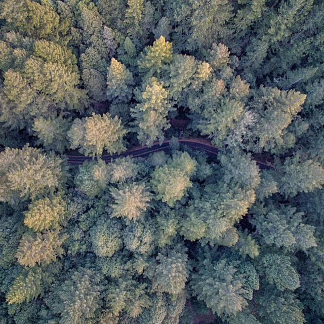 We are all in a forest together, sometimes it takes a #4k view to know you are not alone.  Credit: @Barryb, shot with a #DJI #inspire1  www.dji.com/inspire-1  #aerial #aerialtechnology