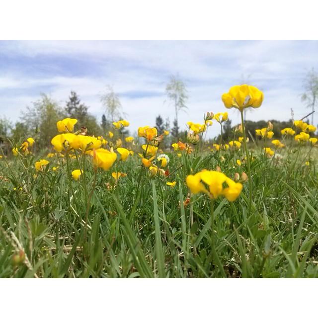 Domingo de asado, campo y familia. Amor a esto. #paz #flor #campo #summer #sunday #loveit #flowers #instamoment #ChacrasDeSanVicente