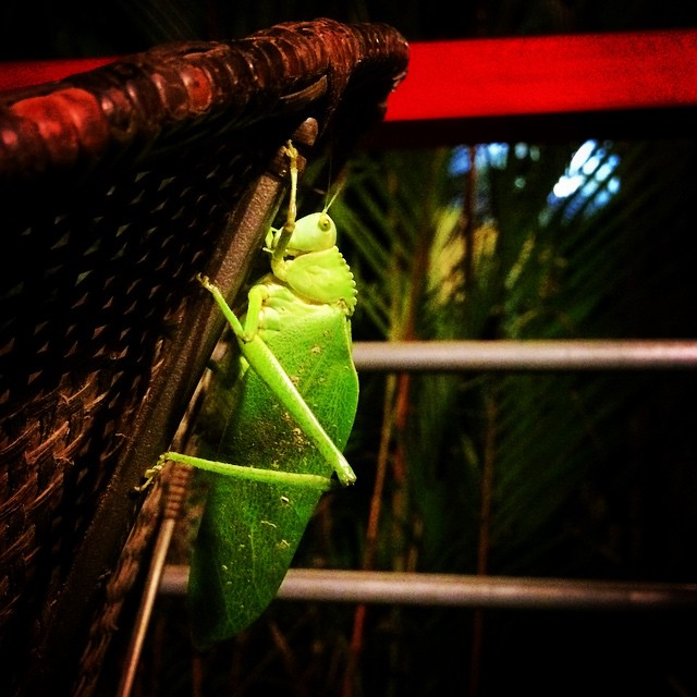 A little visitor friend. One thing you can expect to see in the South Pacific of Costa Rica: lots of plants, animals, and critters that you couldn't have imagined actually exist!