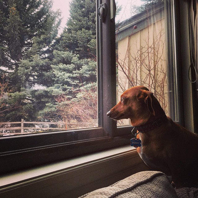 Buddy's also waiting for the snow to fly #prayforsnow #snowdancing #winter #inneedofpow #pow #snowboarding #vail #mountainlife