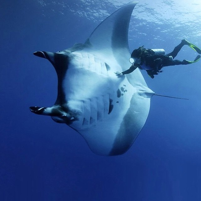 Do something extraordinary this weekend! #kameleonz #lifesabeach #thisismybeach #gopro #brasil #goprobrasil #brazil #scuba #diving #scubadiving #friends #traveling pic by @livinganimals •• Kameleonz.com