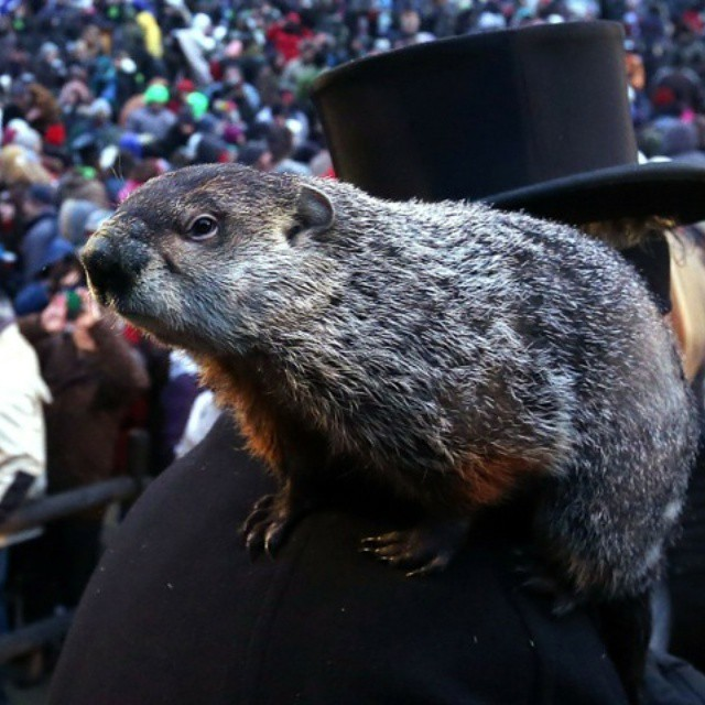 Punxsutawney Phil predicts 6 more weeks of winter! We'll take it #LetItSnow #Pray4Snow