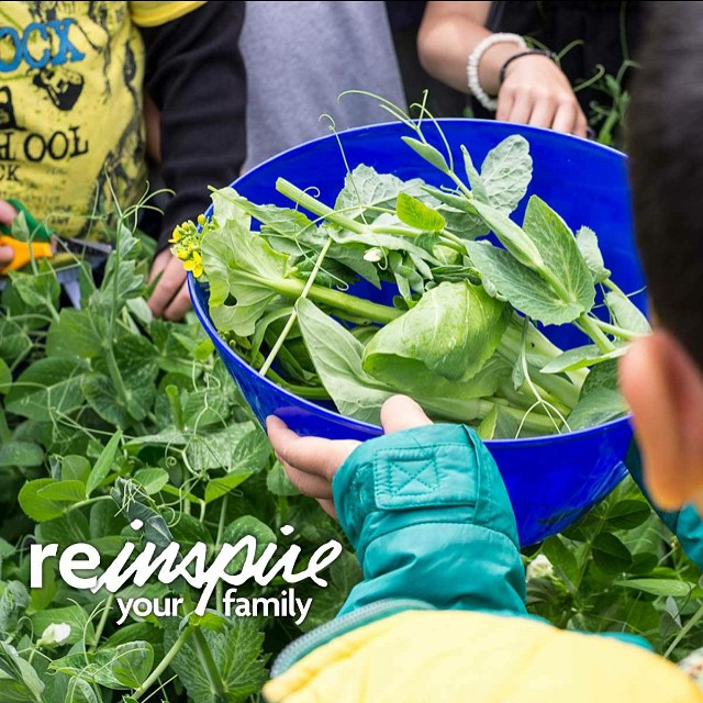 Have you been trying to get your family in love with organic foods? Our friends at @naturespathorganic want you to reinspire them! Read more on their blog! Link in bio #NewOrganicYou