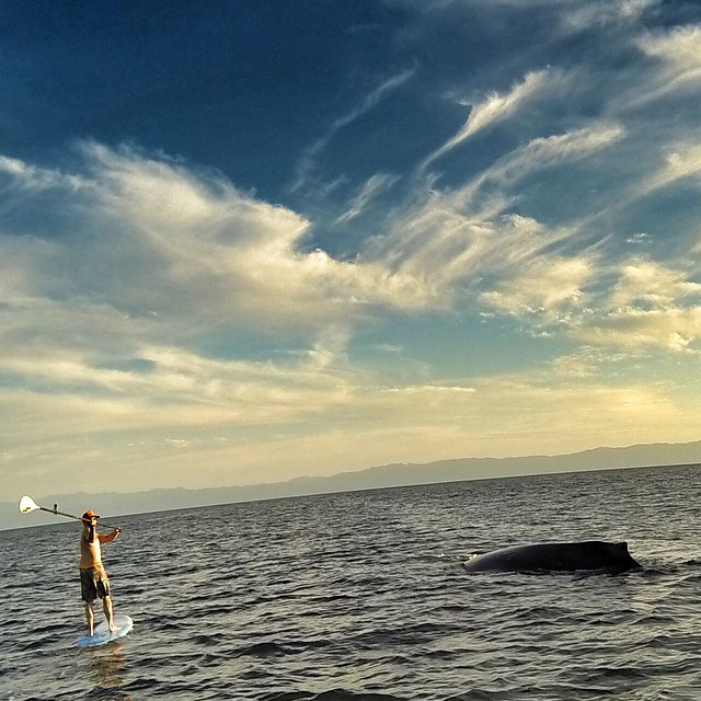 Yep, that's right! We paddled with whales today! So fu€king rad! We got 15ft from the mama and her calf! Feeling blessed! @gabegley @waveofwellness #waveofwhaleness #whaledit! #nailedit! #supandyogaexpeditionpuntamitamexico