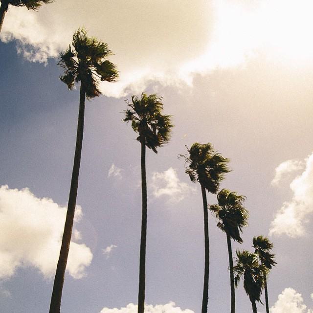 Keep Palm