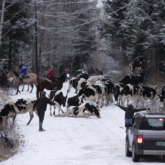 Traffic jam in route to shop. Not jerseys but still no snow tires.