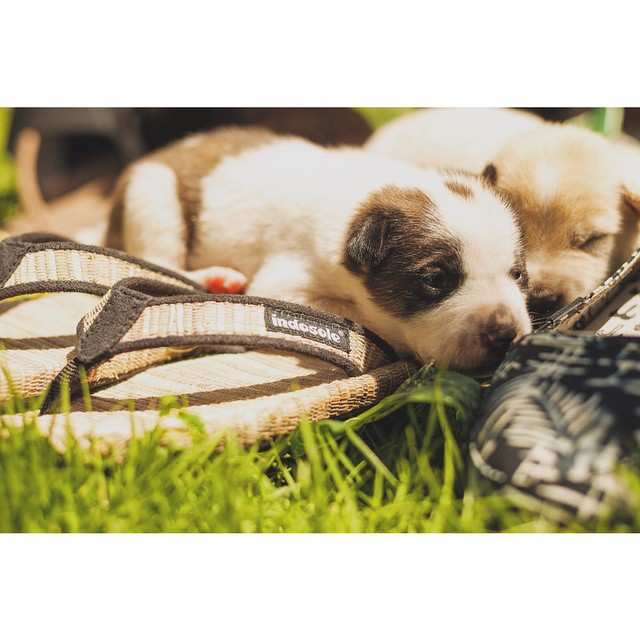 Puppies or sandals? Decisions decisions...Valentines Day is around the corner ❤️ #bananaweavesandals #soleswithsoul #puppies