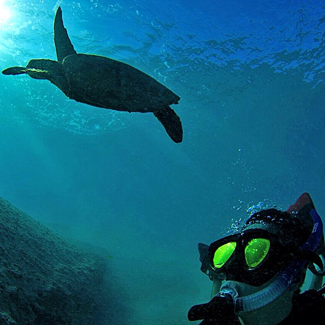 @zackdougan reef diving in Hawaii. GoPro HERO3+ | GoPole Bobber #gopro #gopole #gopolebobber #diving #hawaii